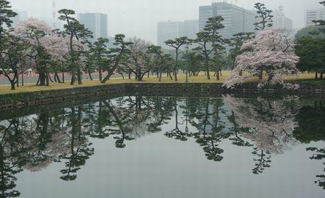 皇居乾通りの桜の公開