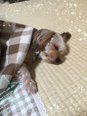 コタツで寝てます