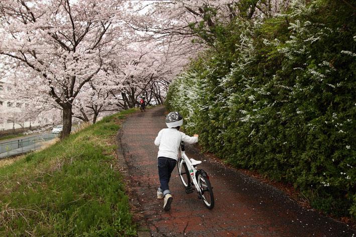 sakusa2.jpg