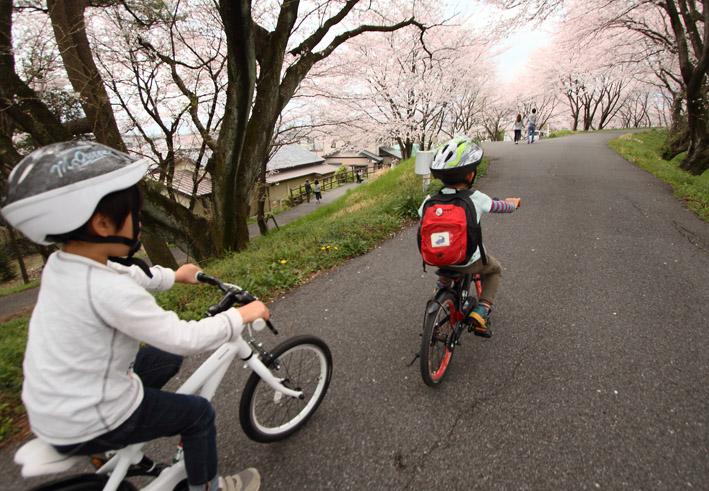 sakusa4.jpg