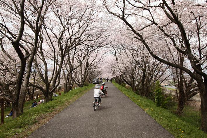 sakusa5.jpg