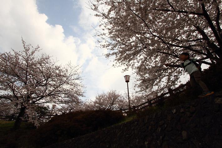 sakusa7.jpg