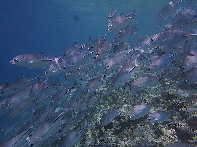 Maldives ハウスリーフ