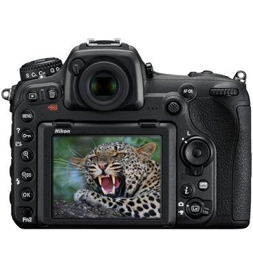 D500_leopard.jpg