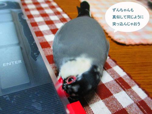 2015-10-tori6.jpg