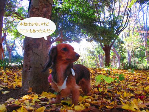 2015-11-sanpo4.jpg