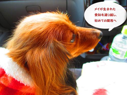 2015-12-kisei2.jpg