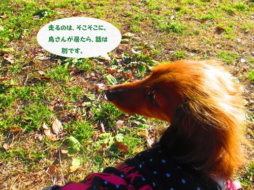 2016-01-satoyama10.jpg