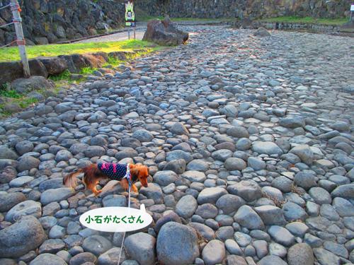 2016-01-satoyama19.jpg