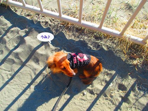 2016-1-beach37.jpg