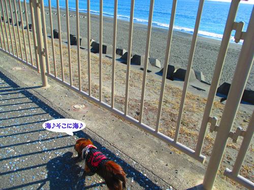 2016-1-beach39.jpg
