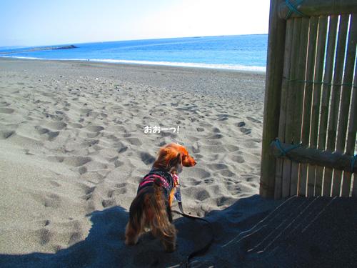 2016-1-beach42.jpg