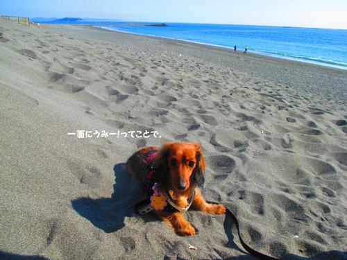 2016-1-beach43.jpg