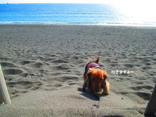 2016-1-beach44.jpg