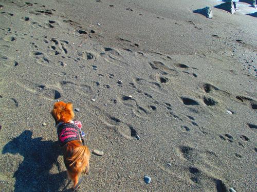 2016-1-beach45.jpg