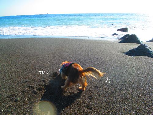 2016-1-beach47.jpg