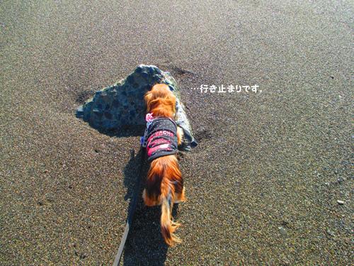 2016-1-beach48.jpg