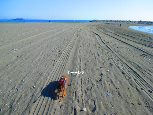 2016-1-beach51.jpg