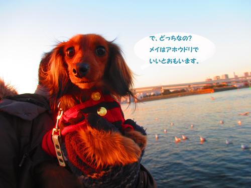 2016-2-daiba100.jpg