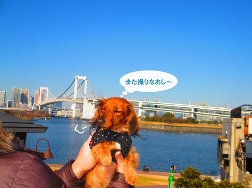 2016-2-daiba16.jpg