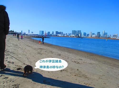2016-2-daiba30.jpg