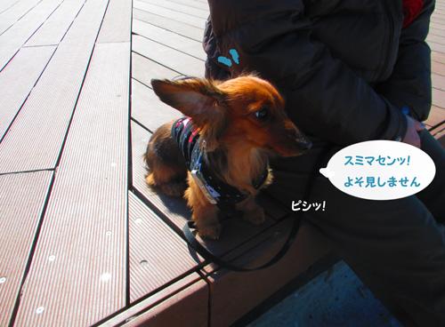 2016-2-daiba36.jpg