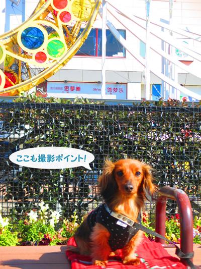 2016-2-daiba50.jpg