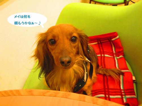 2016-2-daiba62.jpg