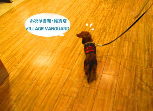 2016-2-daiba80.jpg