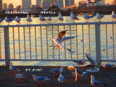 2016-2-daiba98.jpg