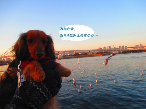 2016-2-daiba99.jpg
