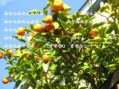 2016-2-mikan13.jpg