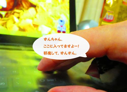 5zun2015.jpg