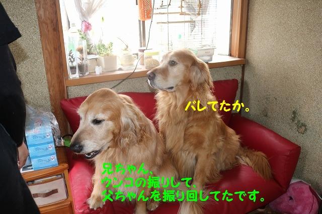 IMG_0013_2016031918564076f.jpg