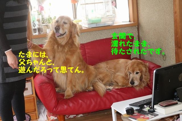 IMG_0021_20160319185642b7d.jpg