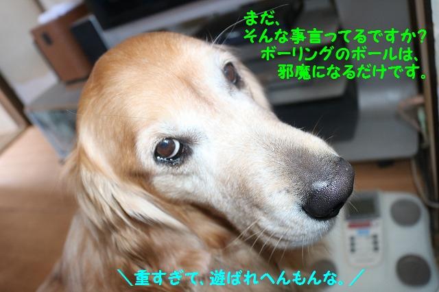 IMG_0178.jpg