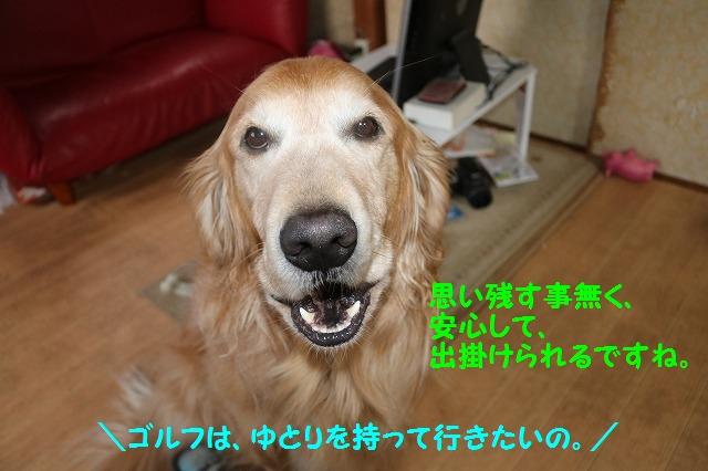 IMG_0375_201603302212030da.jpg