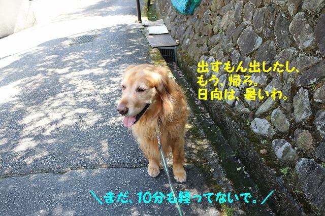 IMG_0516_201604022038558e2.jpg