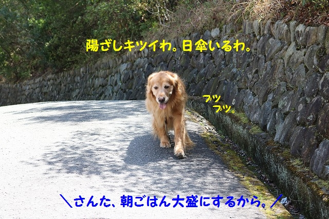 IMG_0521_201604022038563f6.jpg