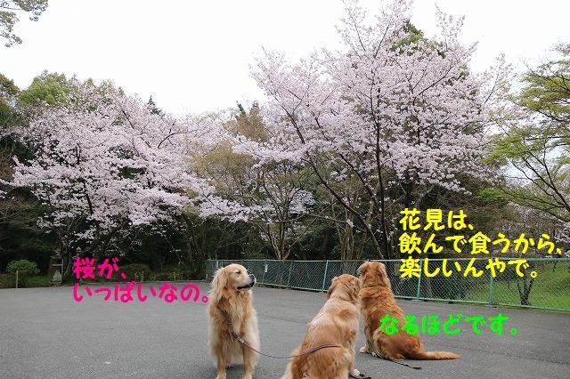 IMG_0881.jpg