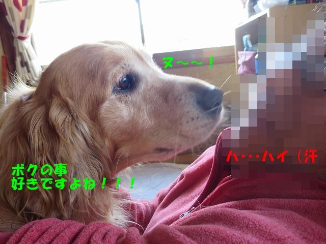 IMG_7480_201603201553353a5.jpg