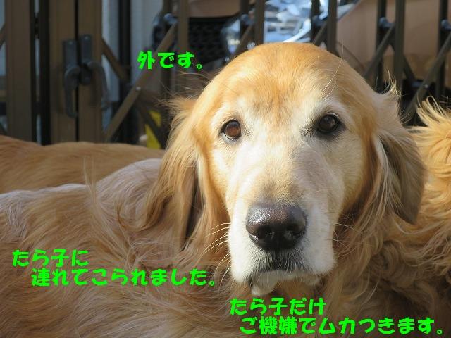 IMG_7669.jpg