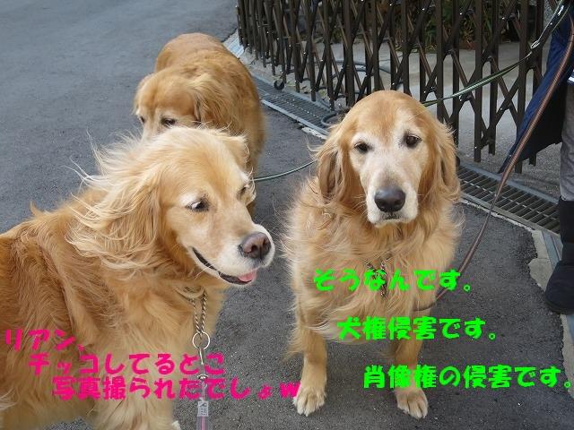 IMG_7678.jpg