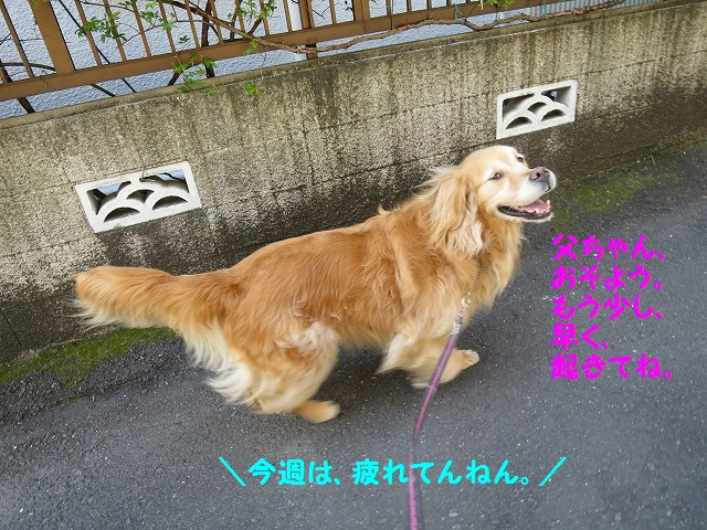 IMG_7700_201603271949016ce.jpg