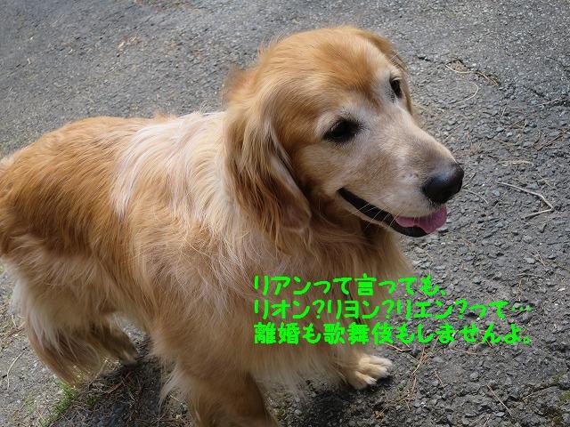 IMG_7782_20160328171533db1.jpg