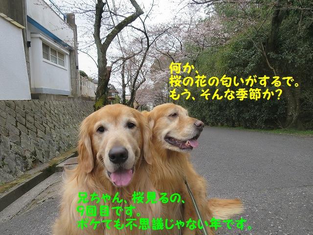 IMG_7808_20160328171618bdc.jpg