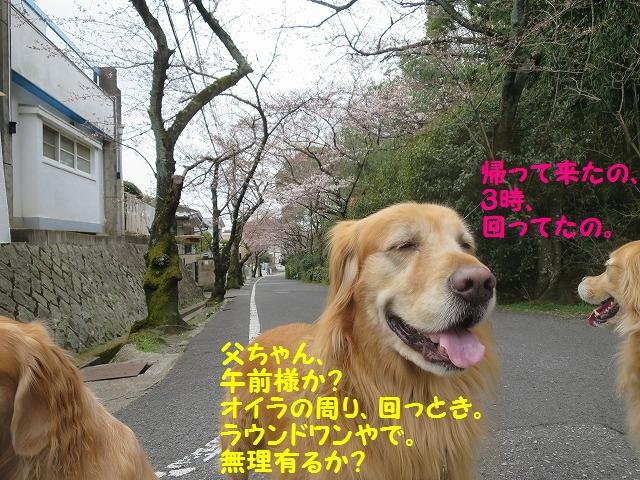 IMG_7809_20160328171627e2f.jpg