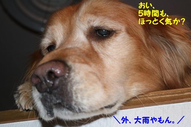 IMG_8177.jpg