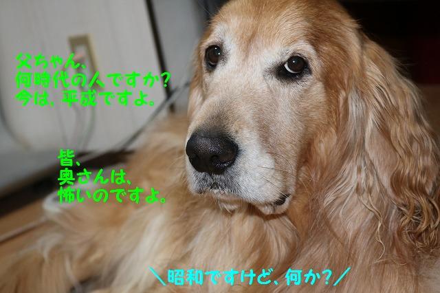 IMG_8377.jpg