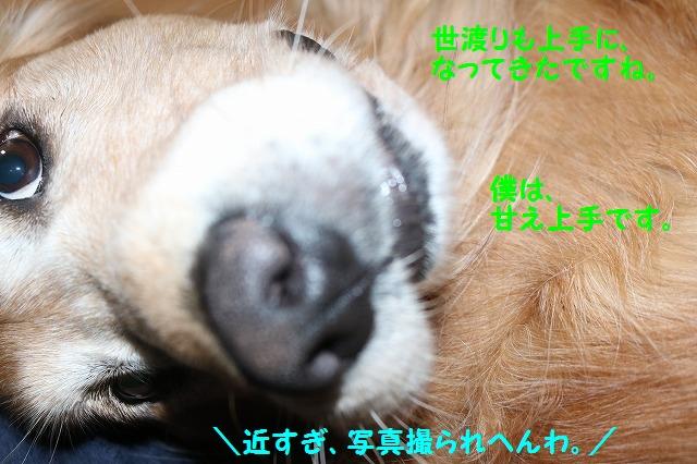 IMG_8529.jpg